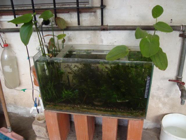 mini plantado DSC02318