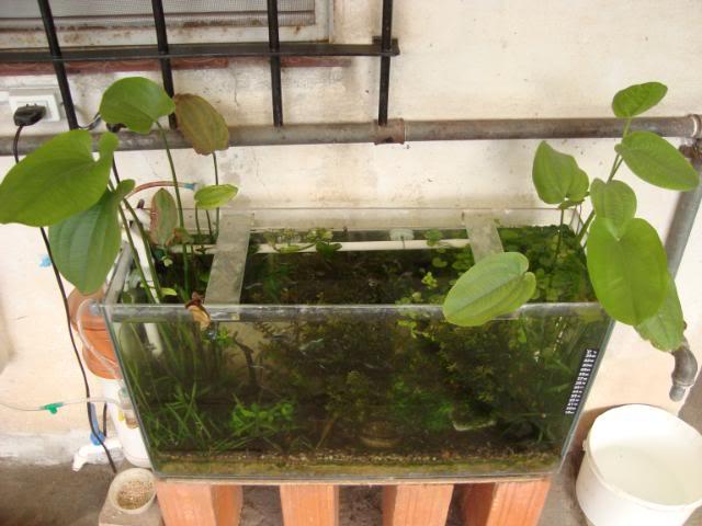mini plantado DSC02323