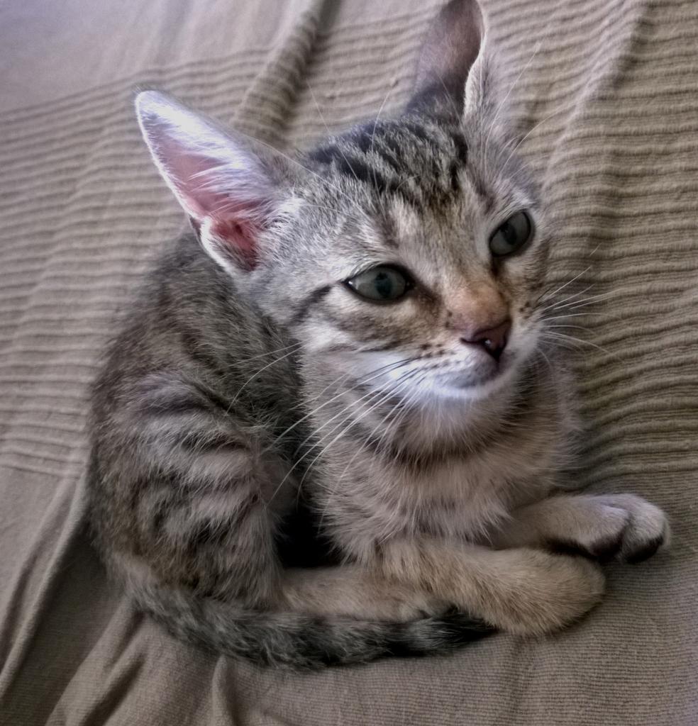 Χαρίζεται γατάκι στην Πάτρα ή και πιο μακρυά WP_20141109_14_40_46_Pro_zpsea60087e