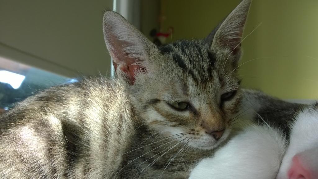 Χαρίζεται γατάκι στην Πάτρα ή και πιο μακρυά WP_20141109_16_04_46_Pro_zps8bd955b0