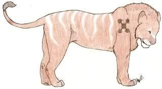 Rudo, Marked Lion Scan0010