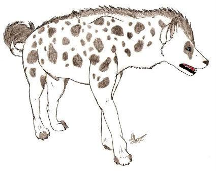 Wari (Hyena) Scan0019-2-1