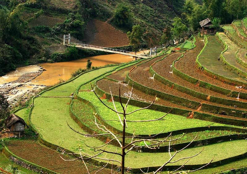 Mù Cang Chải ( Yên Bái ) được mệnh danh là thiên đường của ruộng bậc thang Mucangchai13