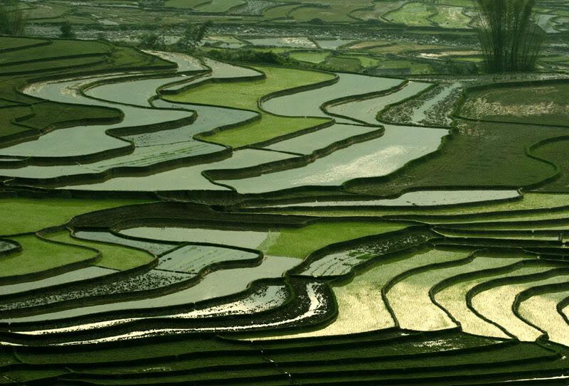 Mù Cang Chải ( Yên Bái ) được mệnh danh là thiên đường của ruộng bậc thang Mucangchai7