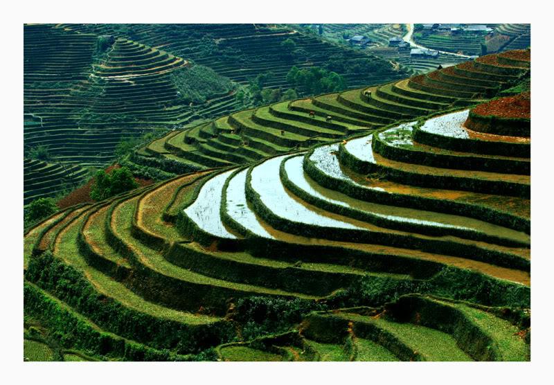 Mù Cang Chải ( Yên Bái ) được mệnh danh là thiên đường của ruộng bậc thang Ruongbacthang2w