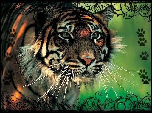 World Of Tigers - Portale Random
