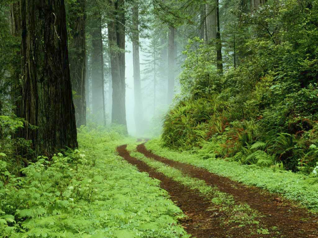 Šuma Forest