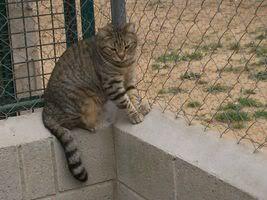 Gatos Machos de Ancat  Badajoz. Ludo e Ibai se han marchado - Página 3 GatosMarzo034