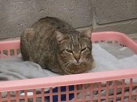 Gatos Machos de Ancat  Badajoz. Ludo e Ibai se han marchado - Página 3 GatosMarzo035