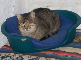 Gatos Machos de Ancat  Badajoz. Ludo e Ibai se han marchado - Página 3 GatosMarzo045