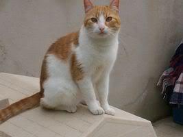 Gatos Machos de Ancat  Badajoz. Ludo e Ibai se han marchado - Página 3 GatosMarzo063