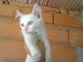 Gatos Machos de Ancat  Badajoz. Ludo e Ibai se han marchado - Página 9 Agosto4004
