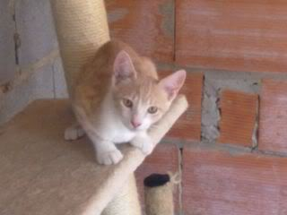 Gatos Machos de Ancat  Badajoz. Ludo e Ibai se han marchado - Página 9 Agosto4013