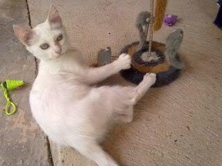 Gatos Machos de Ancat  Badajoz. Ludo e Ibai se han marchado - Página 9 Agosto4017