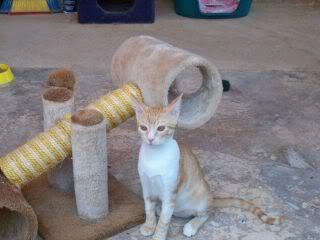 Gatos Machos de Ancat  Badajoz. Ludo e Ibai se han marchado - Página 9 GatosAgosto2025