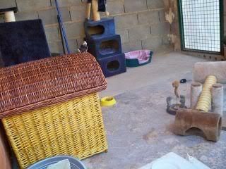 Gatos Machos de Ancat  Badajoz. Ludo e Ibai se han marchado - Página 9 GatosAgosto2027
