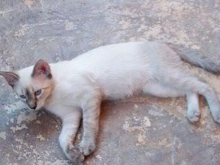 Gatos Machos de Ancat  Badajoz. Ludo e Ibai se han marchado - Página 9 GatosAgosto2076