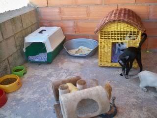 Gatos Machos de Ancat  Badajoz. Ludo e Ibai se han marchado - Página 9 GatosAgosto2080