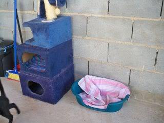 Gatos Machos de Ancat  Badajoz. Ludo e Ibai se han marchado - Página 9 GatosAgosto2081