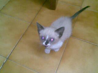 Gatos Machos de Ancat  Badajoz. Ludo e Ibai se han marchado - Página 7 01102009005