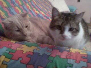 Gatos Machos de Ancat  Badajoz. Ludo e Ibai se han marchado - Página 7 Imagen031