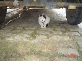 Gatos Machos de Ancat  Badajoz. Ludo e Ibai se han marchado - Página 3 Dynfpz
