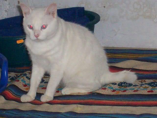 Gatos Machos de Ancat  Badajoz. Ludo e Ibai se han marchado - Página 2 Enero1026