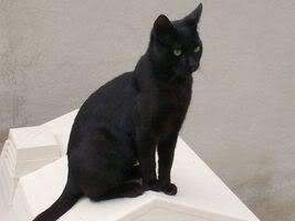 Gatos Machos de Ancat  Badajoz. Ludo e Ibai se han marchado - Página 3 Tom17