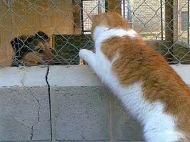 Gatos Machos de Ancat  Badajoz. Ludo e Ibai se han marchado - Página 2 24022009018