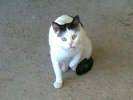 Gatos Machos de Ancat  Badajoz. Ludo e Ibai se han marchado - Página 2 25022009012-1