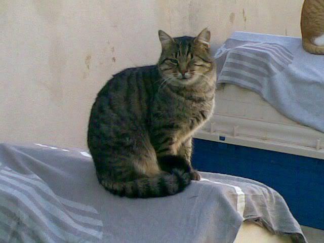 Gatos Machos de Ancat  Badajoz. Ludo e Ibai se han marchado - Página 2 27112008002