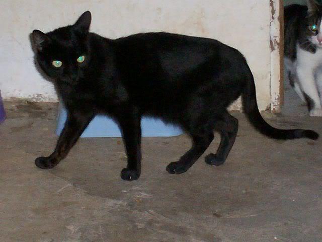 Gatos Machos de Ancat  Badajoz. Ludo e Ibai se han marchado - Página 2 GatosDiciembre019