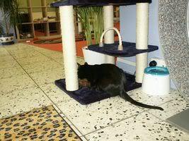 Gatos Machos de Ancat  Badajoz. Ludo e Ibai se han marchado - Página 3 PICT05571trpico