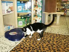 Gatos Machos de Ancat  Badajoz. Ludo e Ibai se han marchado - Página 3 PICT05581paquita