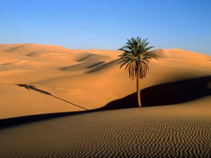 مساء الخير أهل الواحة Sahara