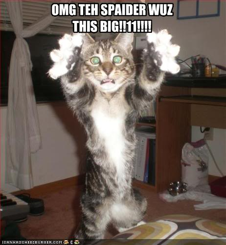 just a few I like Funny-pictures-cat-saw-a-really-big