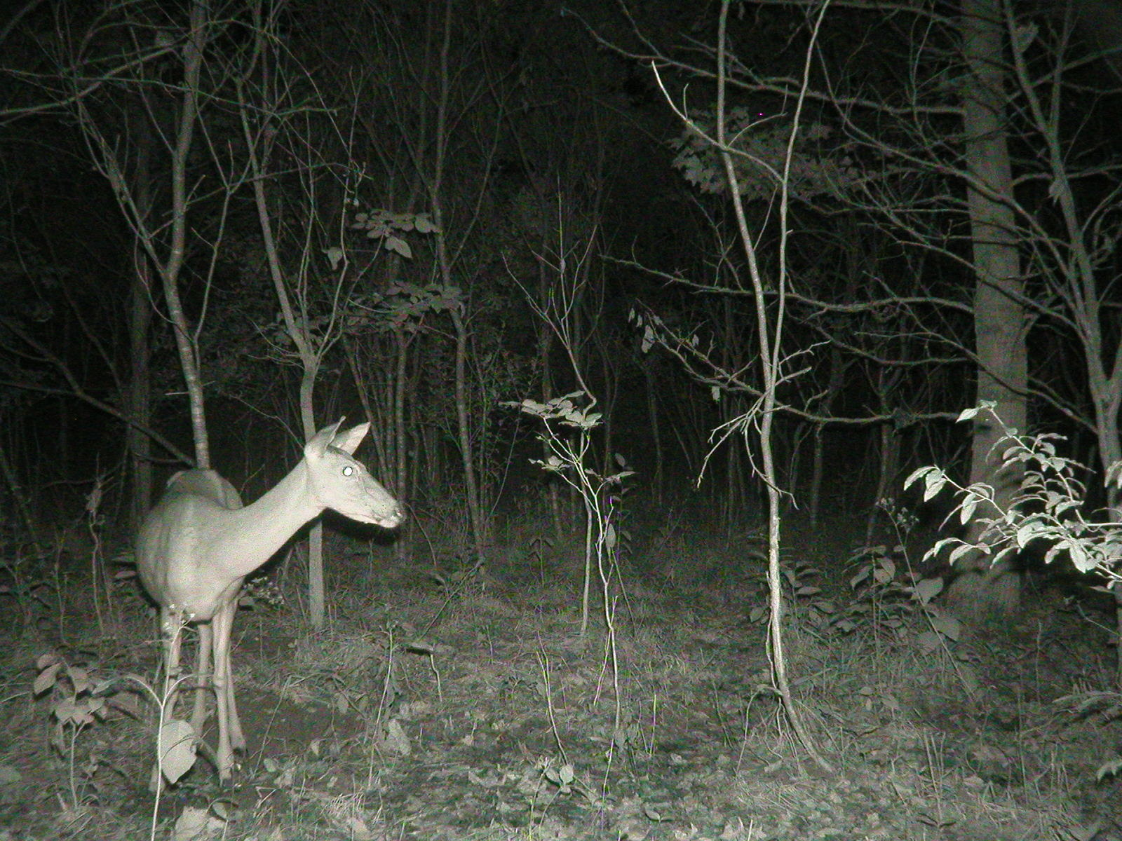 Whispers Death Homebrew Game Cam Photos 2012 P1010009