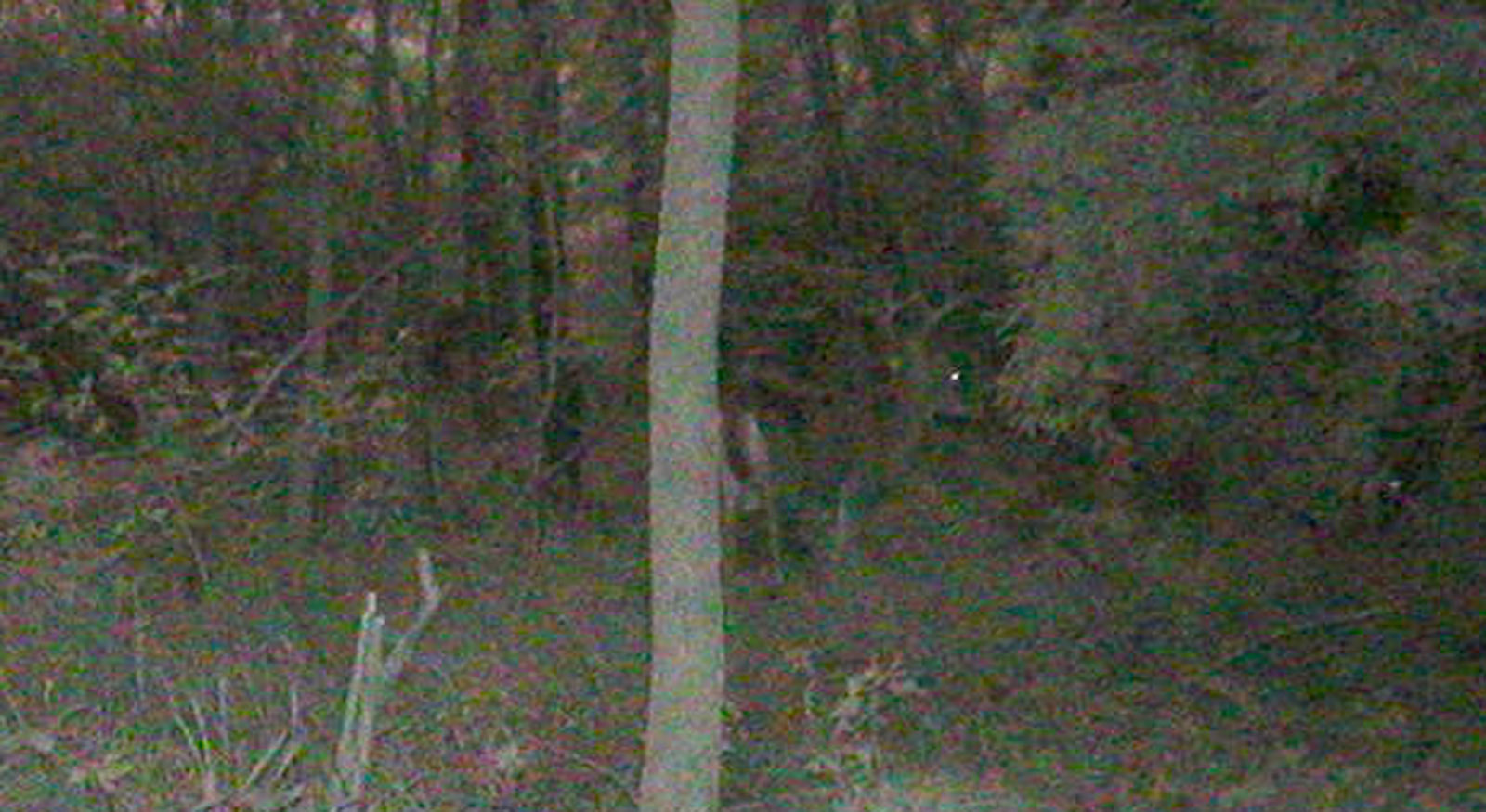 Whispers Death Homebrew Game Cam Photos 2012 P1010046crop