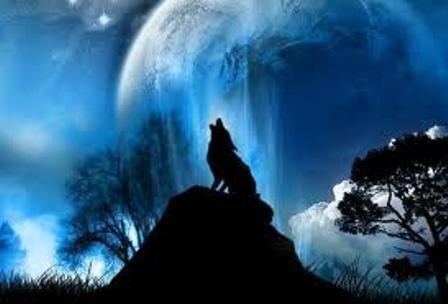 Covjek u svom vremenu Usamljeni-vuk
