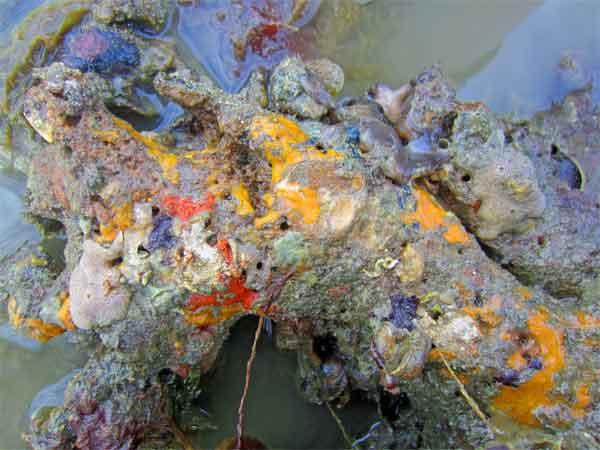 Sponges-open ocean and brackish. Sponges-