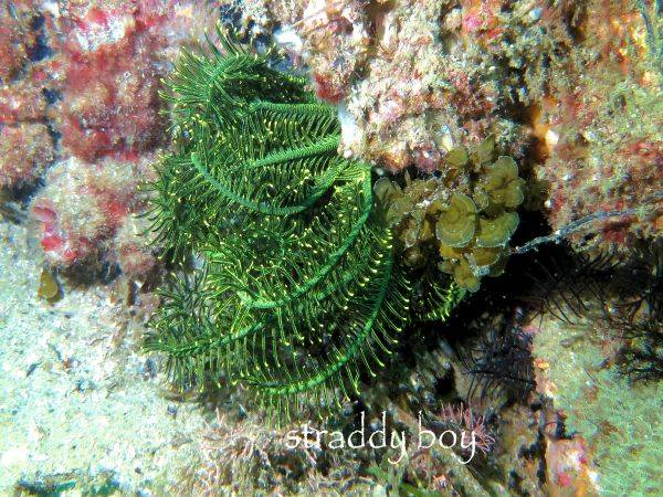 new light for my camera Green%20feather%20starfish_zpso1o47izd