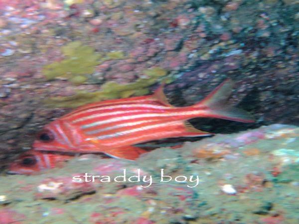 Spot x dive Red%20scrall%20fish_zpslmqajrho
