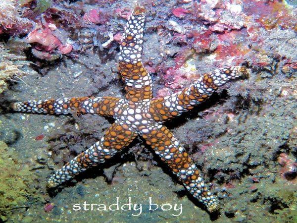 Mudjimba-old woman island trips. Starfish%203_zps0hcvr8n9