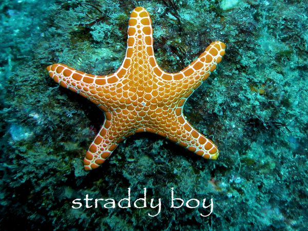 Scuba diving and free diving in South East Queensland for August 2015. Starfish3_zpsosnhhrs3