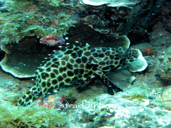 Scuba , free diving and low tide walks in SEQ for August 2016 Cod_zpscvobz6rh