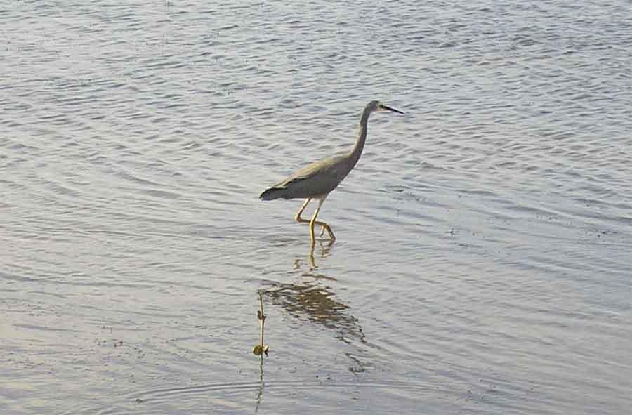 Brisbane bayside beautiful coast line,a little piece of it! Bird