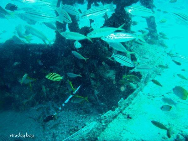 DC3 dive site off Stradbroke Island. Dave%204_zpsxesgvika
