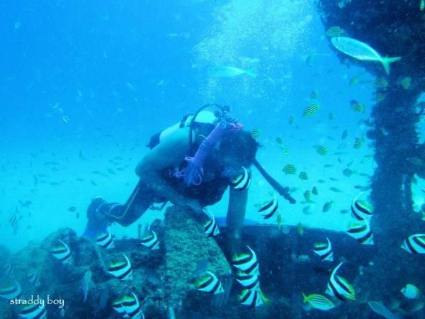 DC3 dive site off Stradbroke Island. Dave%205_zps5vhqtixv