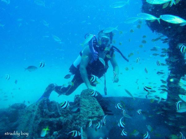 DC3 dive site off Stradbroke Island. Dave%206_zps71n7rztx
