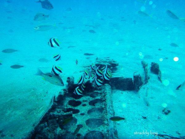 DC3 dive site off Stradbroke Island. Dave%208_zpsyao8ubun